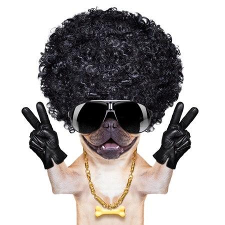 Ihr Hund mit Afro-Perücke? Besser nicht…